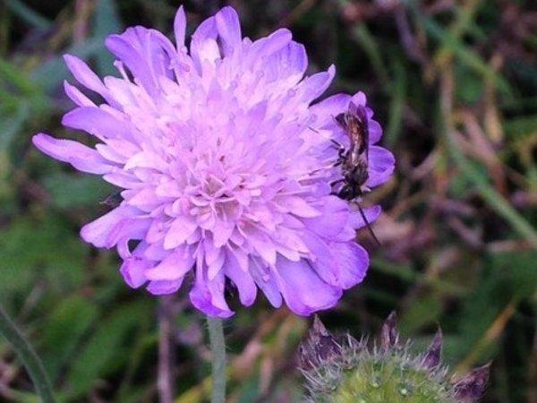 automne-fleur-violette-plus-insecte