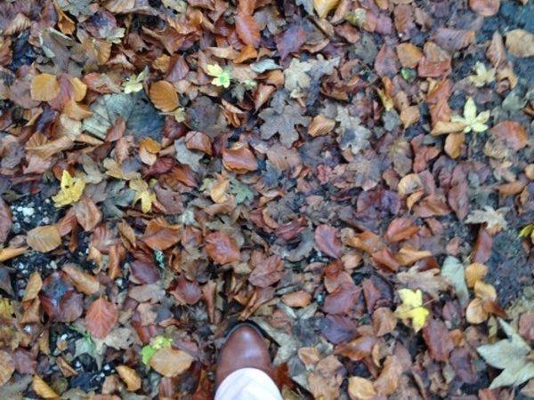 automne-sud-meusien-pied-dans-les-feuilles-mortes