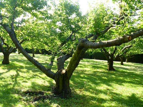 château-de-Bagnols-extérieur-arbres