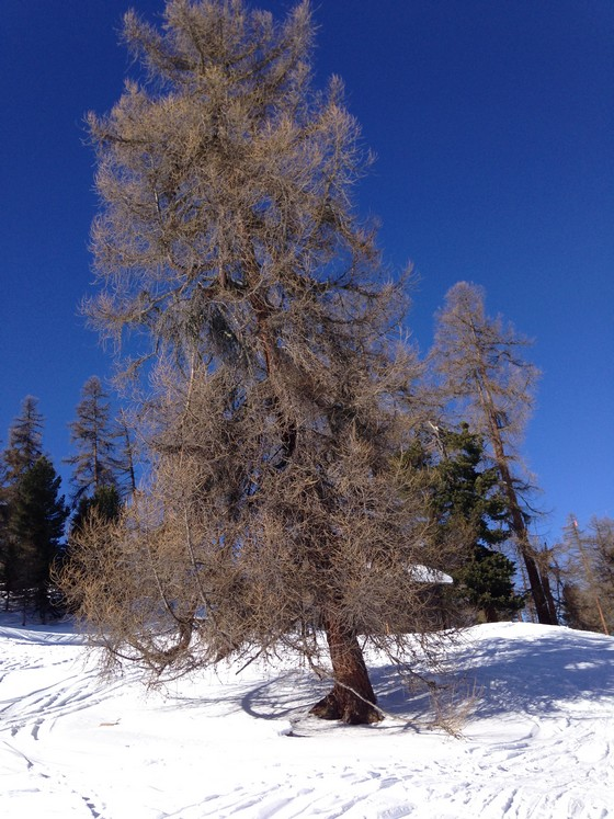 suisse sports d'hiver vercorin
