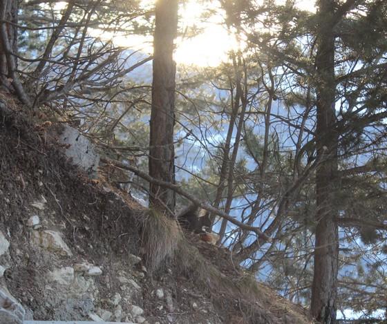 vercorin écureuil ski