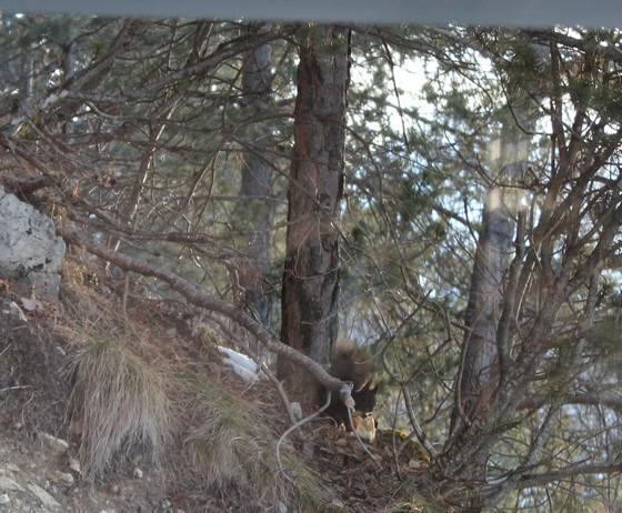 vercorin ski ecureuil