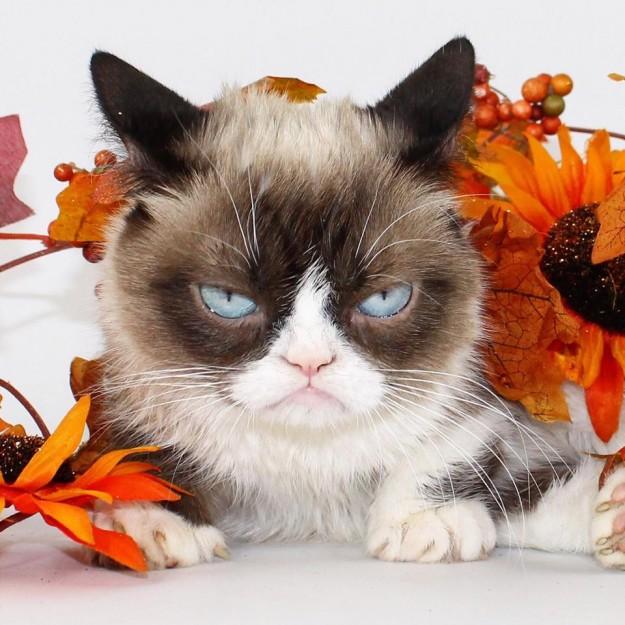 grumpy-cat-le-chat-grincheux-amour-de-chat