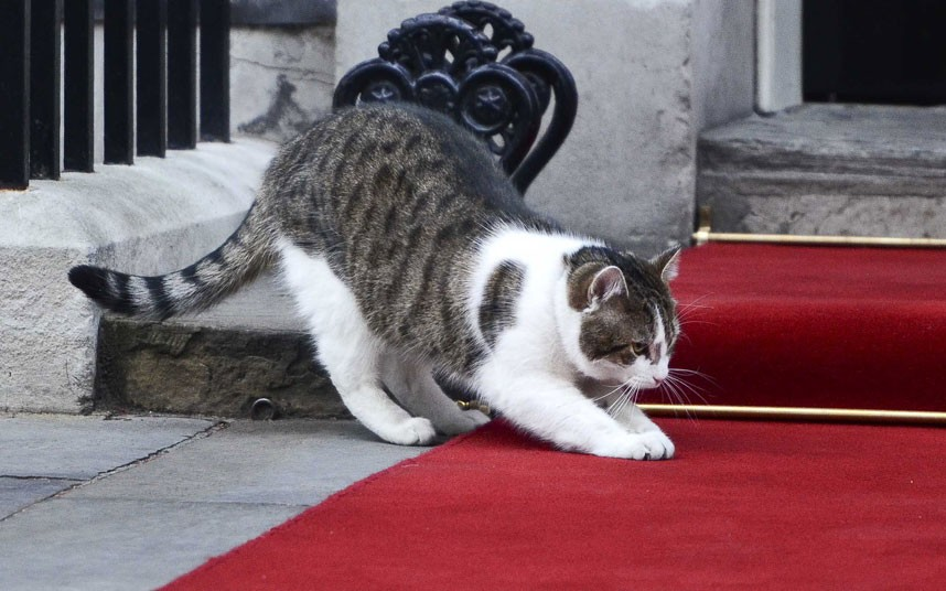 Larry-the-cat-10-Downing-steet-griffe-tapis-rouge