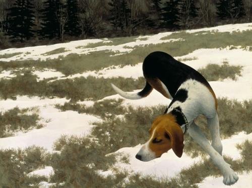 Colville-chien-de-chasse