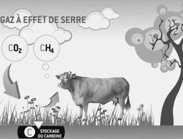 gaz-effet-serre-vache-émission-de-méthane