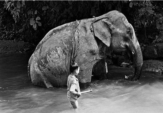la-toilette-de-l-elephant-claude-guillaumin