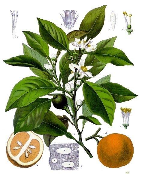 café blanc ahweh-baida