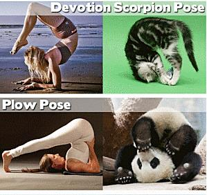 yoga-postures