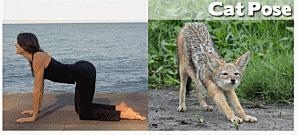 posture-du-chat-yoga
