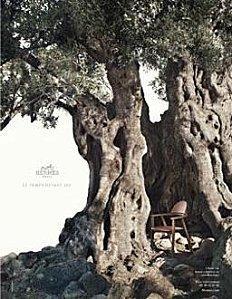 arbres-hermès