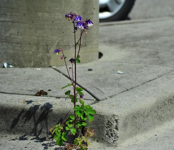 slowlife-fleur de béton