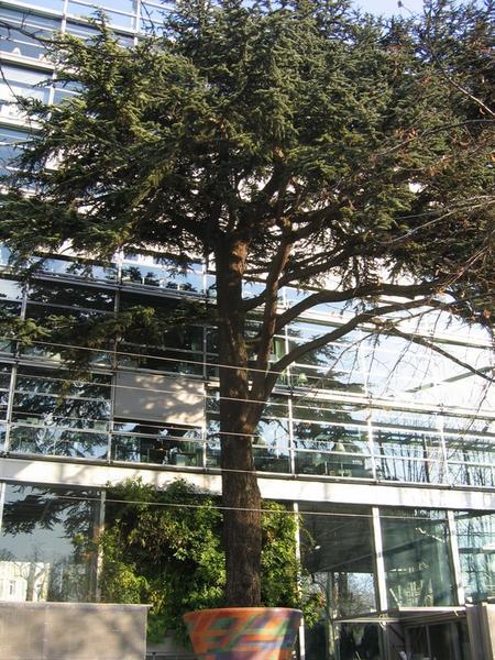 Fondation-Cartier-façade-cédre-du-liban