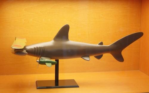 kitano-requin