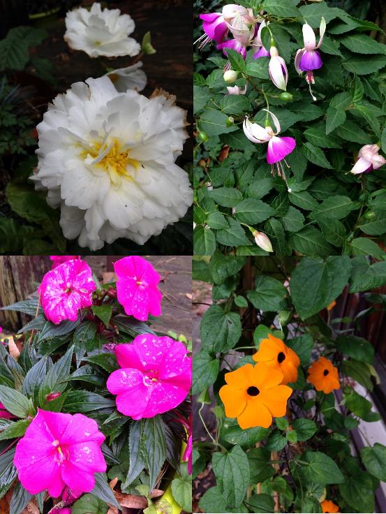 fleurs-- d-automne