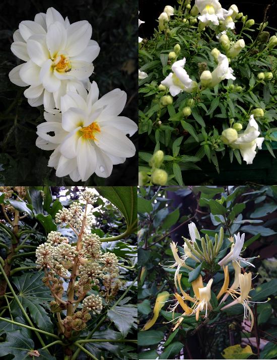Automne -fleurs