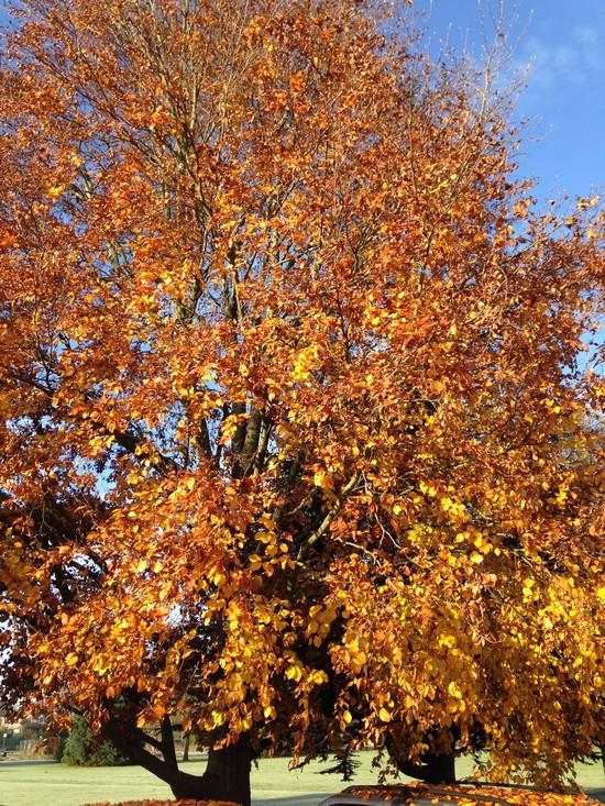 Automne-arbre