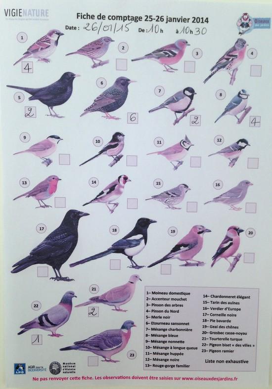 comptage-des-oiseaux