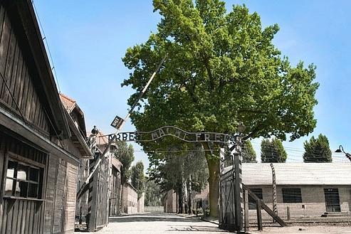 Auschwitz-arbre-mémoire-du-camp-entrée