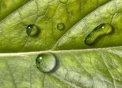 feuille-verte-avec-goutte-d-eau