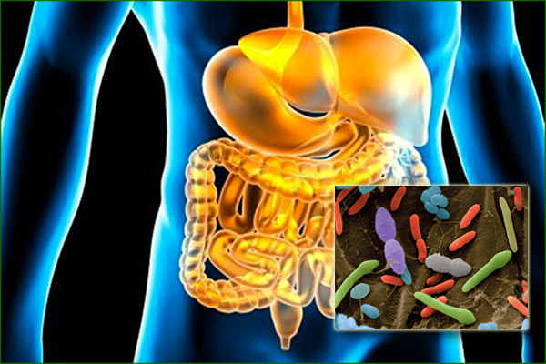 flore-intestinale