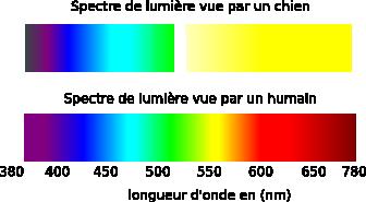 spectre-de-la-vision-des-couleurs-du-chien