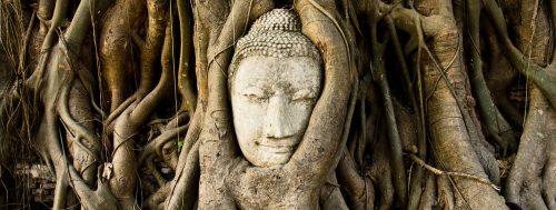 bouddha-dans-un-figuier-des-banians-a-wat-mahathat-en-thailande