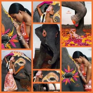 publicité-rose-indien-hermès