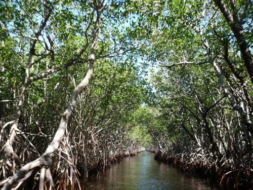 mangroves-Everglades-Floride