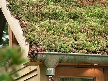 toit-appentis-de-jardin-végétalisé-sédum