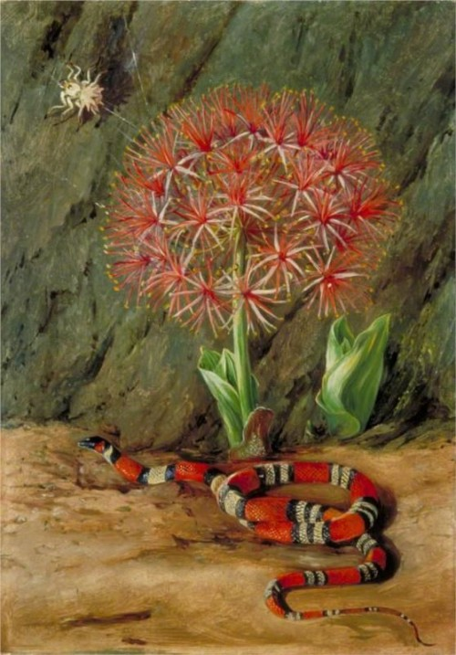 Marianne-North-serpent-corail-araignée