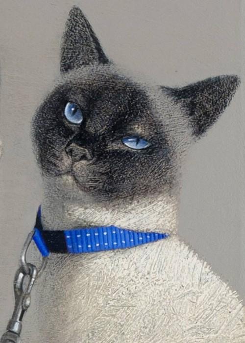 vladimir-Dunjić-chat-laisse-bleue
