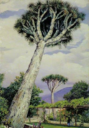 dragon-tree-marianne-north