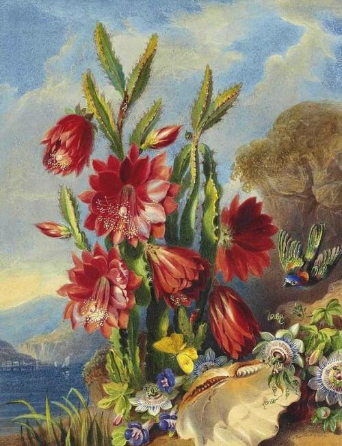 valentine-bartholomew-cactus