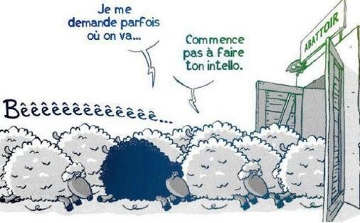 mediocratie-moutons-intello