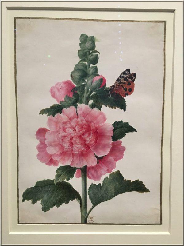 maria-sibylla-merian-roses-trémières