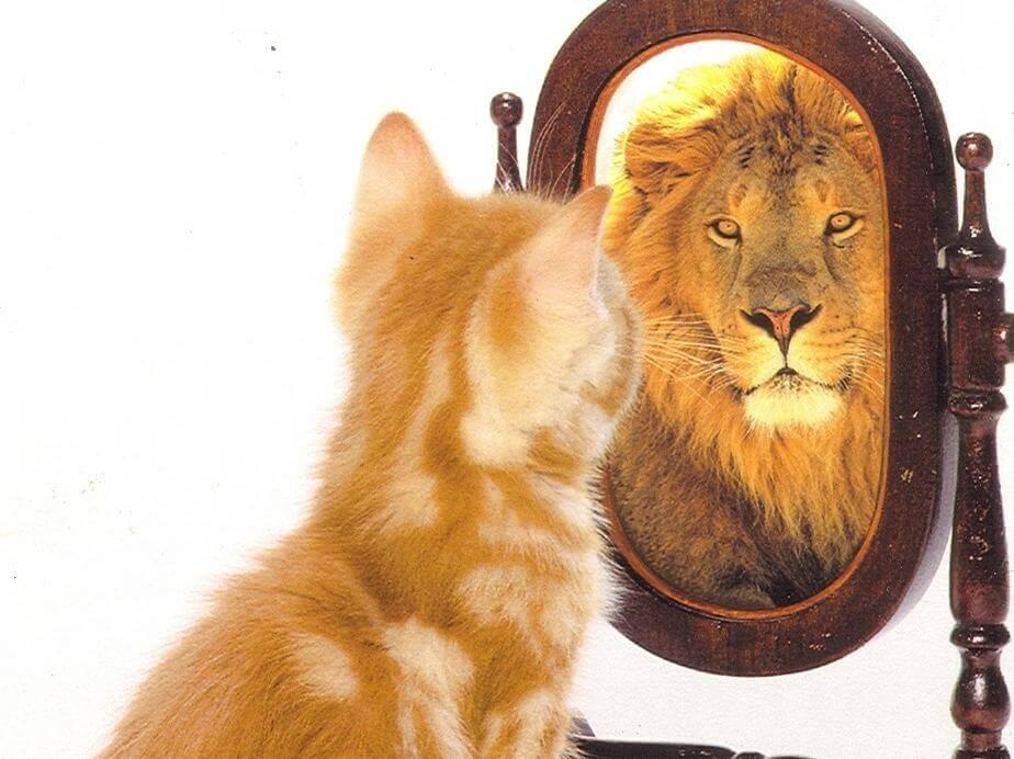 chat-qui-se-voit-comme-un-lion