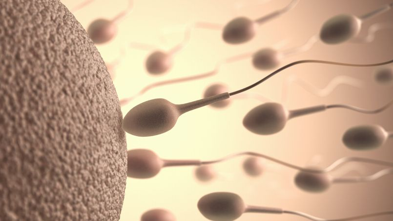 spermatozoides-nutella