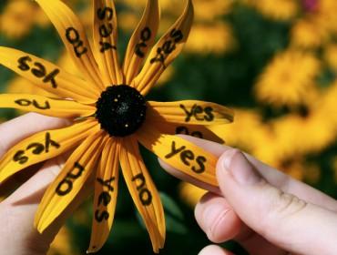 marguerite-jaune-décider-juste