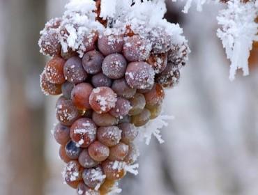 vin de glace
