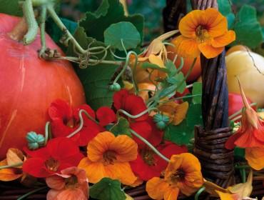 automne spleen