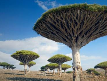 arbre-extraordinaire