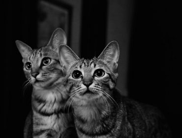 duo-des-chats